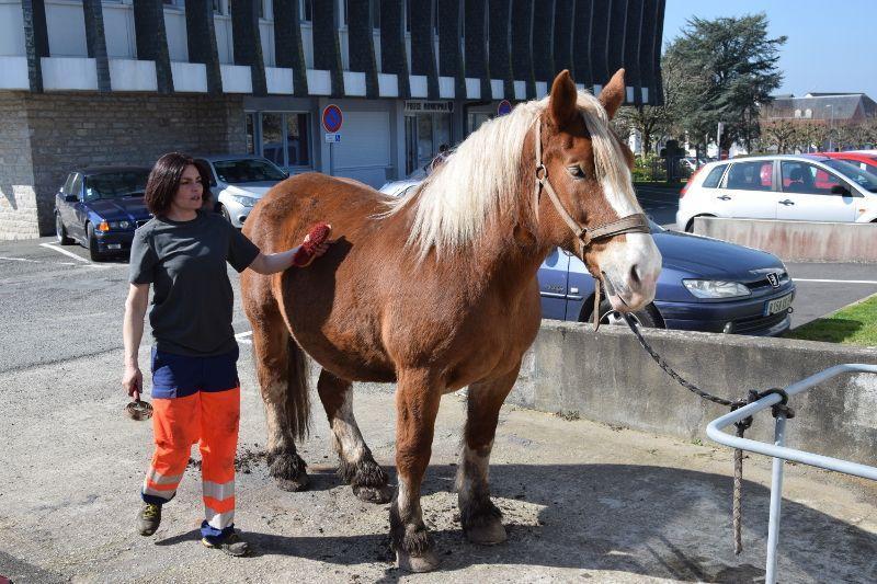 cheval territorial