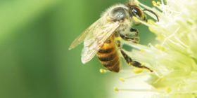 """Exposition """"abeilles"""" à la médiathèque de Questembert du 5 au 22 septembre"""